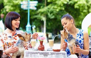 """Sabemos que tu mascota hace parte de tu familia y sabemos lo triste que es tener que dejarla cuando tienes planes o paseos familiares, por eso te compartimos estos lugares """"Pet friendly"""" del país para que la incluyas en tus salidas."""